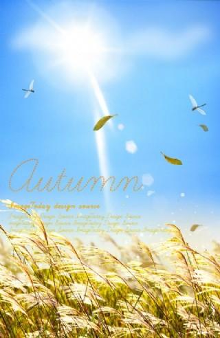 唯美 秋季 陽光 蘆葦